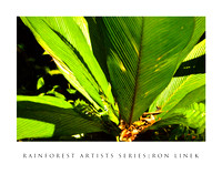 Rainforest Artists' series-photos of the rainforest as if painted by famous artists.